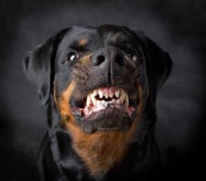 NJ dog bite injury attorneys near me